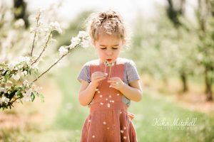 LITTLE GIRL BLOWING DANDELIONS ON SPRING BLOSSOM PHOTOSHOOT BY CHELMSFORD PHOTOGRAPHER KIKA MITCHELL PHOTOGRAPHY