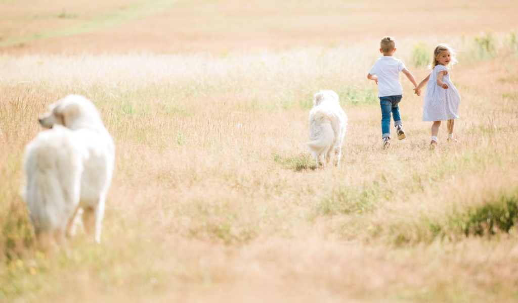 CHILDREN RUNNING WITH DOGS BY ESSEX FAMILY PHOTOGRAPHER KIKA MITCHELL PHOTOGRAPHY CHELMSFORD