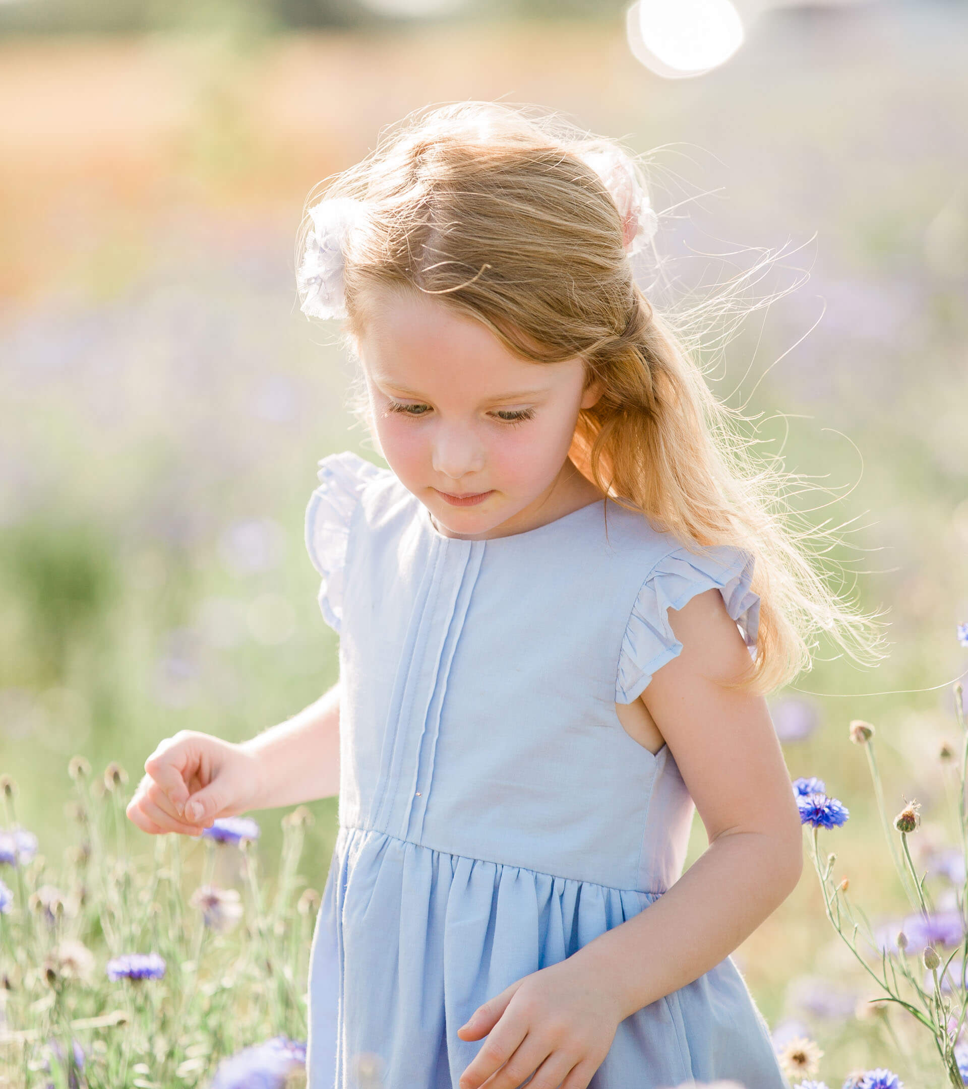 Young girl in blue top walking through the cornflowers in summer with her hair blowing in wind captured by Kika Mitchell Photography